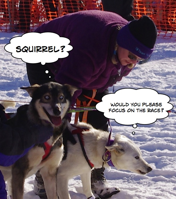2011 Iditarod photos - Funny sled dog photo