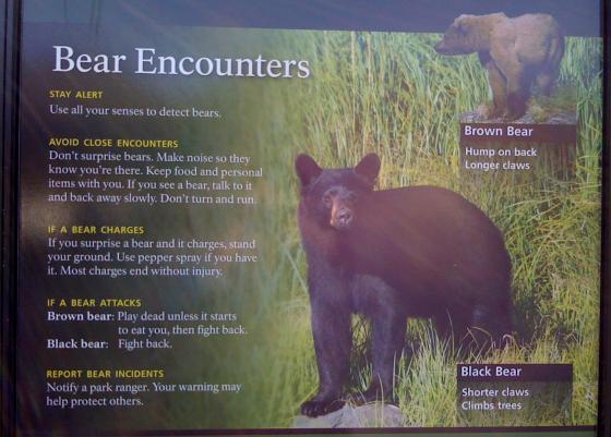 Alaska bear safety (Exit Glacier, Seward, Alaska)