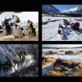 Sled dog photos from the 2014 Iditarod trail