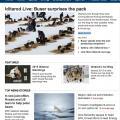 Iditarod sled dogs, 2013 race