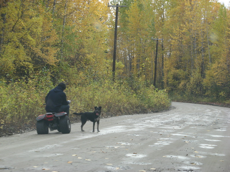 ATV and a dog in Talkeetna.