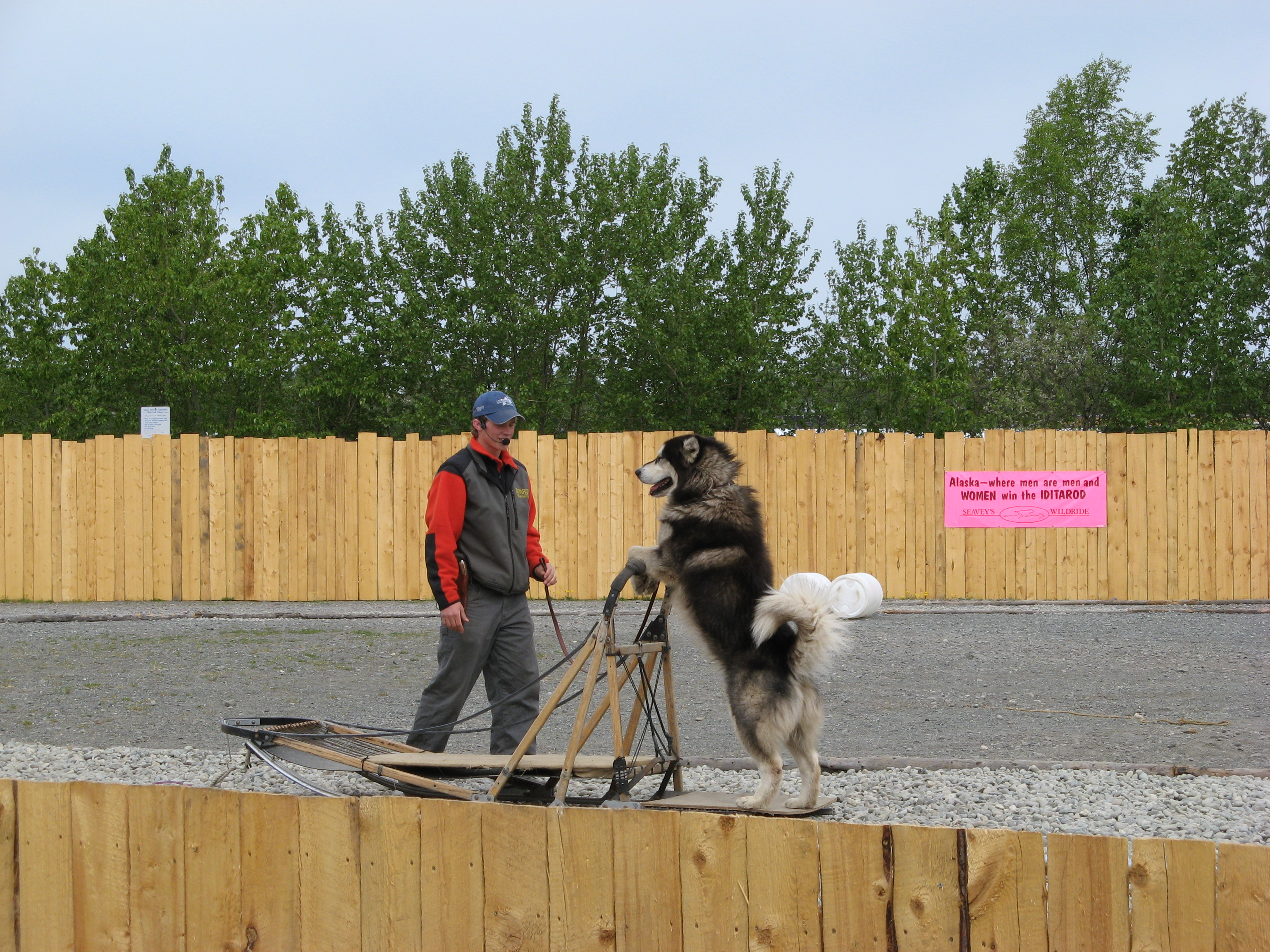 Seavey sled dog show in Anchorage, Photo 1.