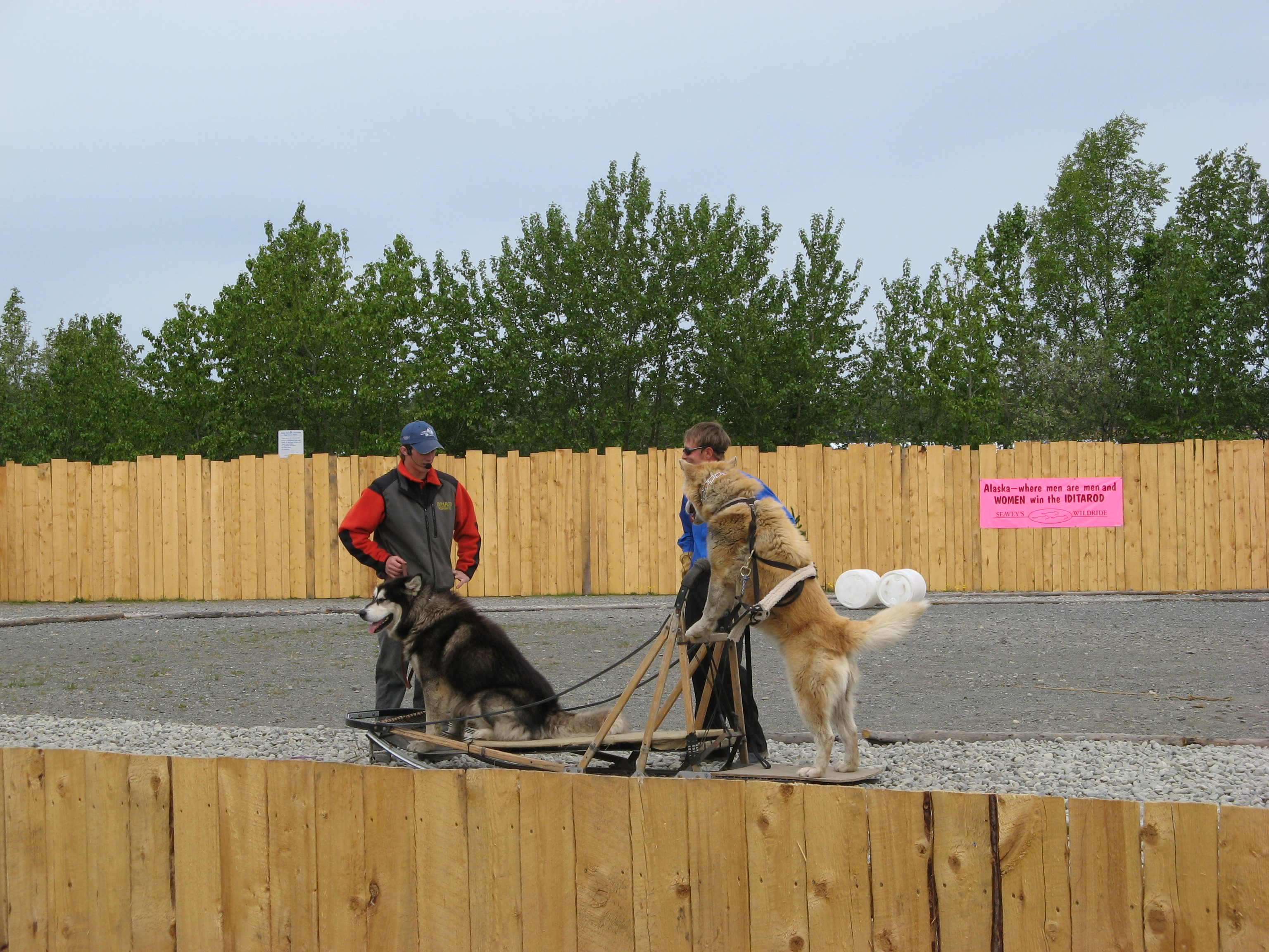 Seavey sled dog show in Anchorage, Photo 2.