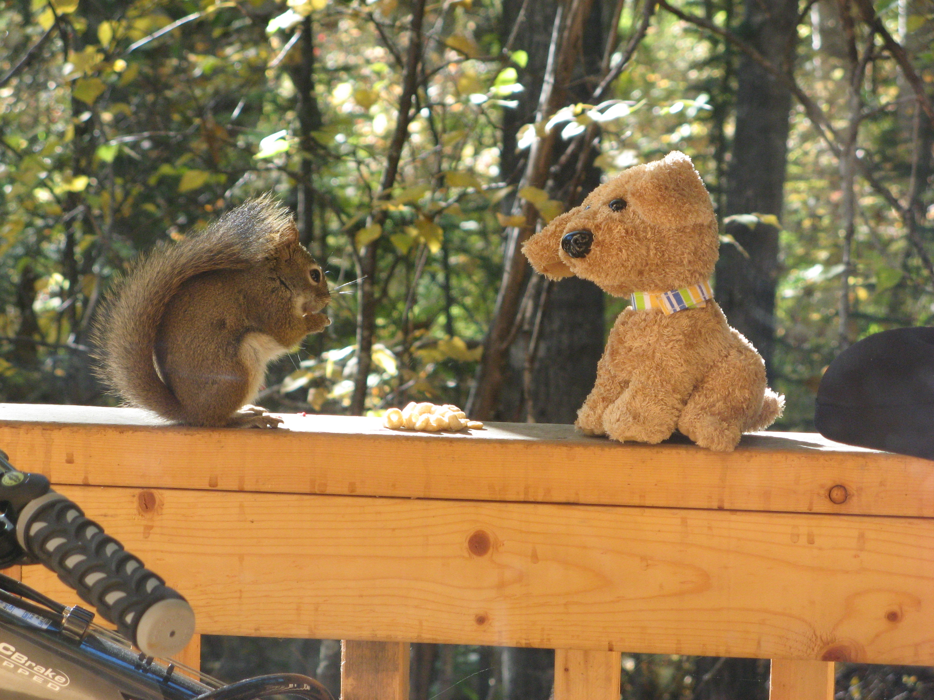 Talkeetna - A cabin, a man, a squirrel, and a stuffed animal.