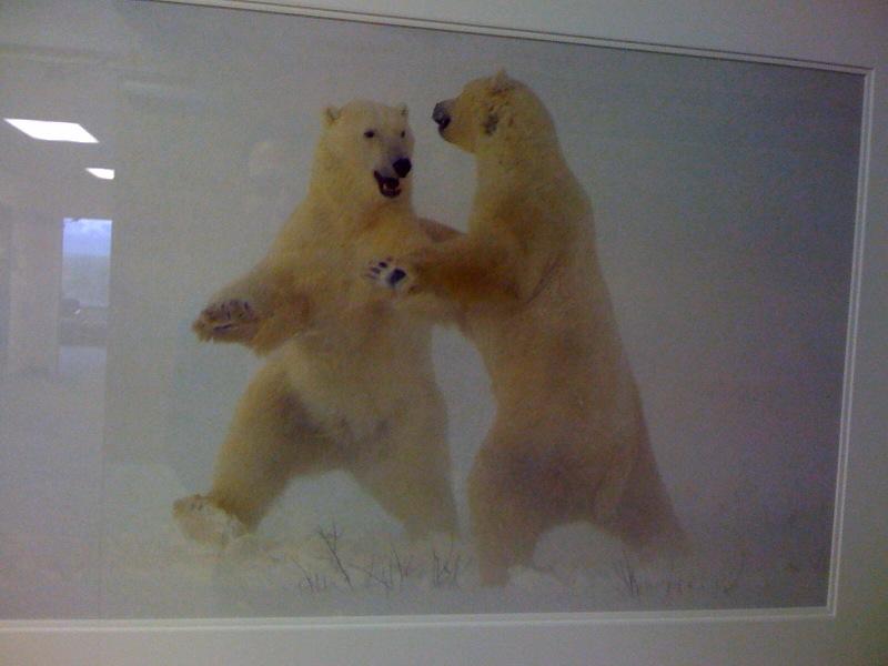Two polar bears dancing