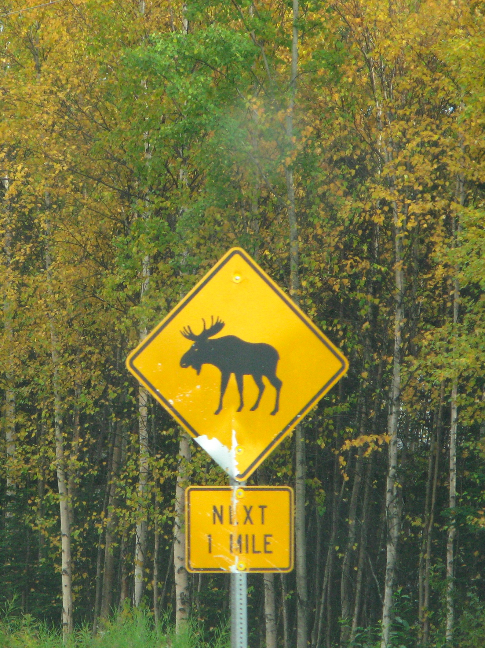 Moose crossing signs in Alaska.
