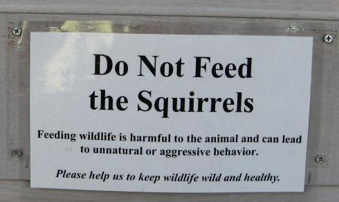 Don't feed the squirrels (sign in Denali National Park)