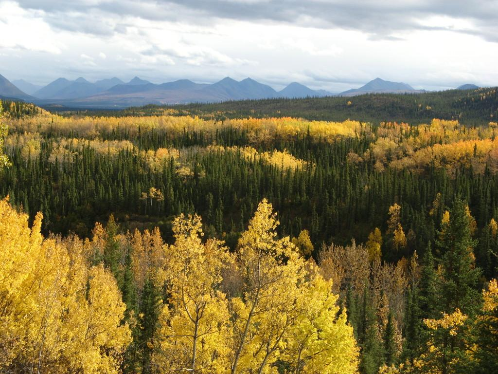 First view of Denali National Park in the fall.
